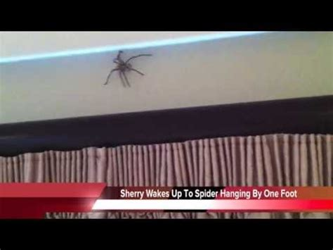 How To Catch A Giant Spider In The Bedroom - YouTube